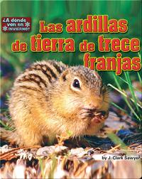Las ardillas de tierra de trece franjas (squirrels)