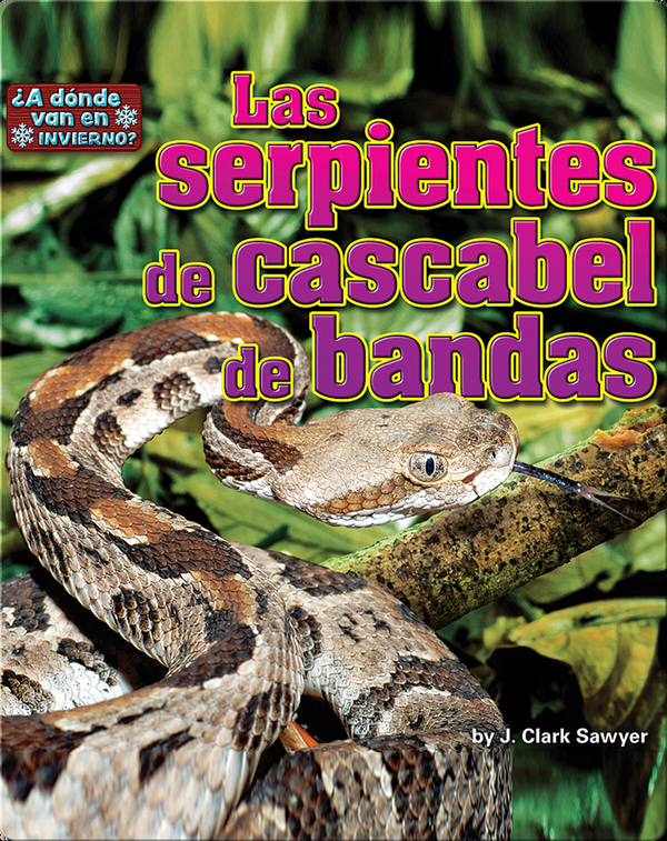 Las serpientes de cascabel de bandas (rattlesnakes)