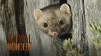 Weasels!