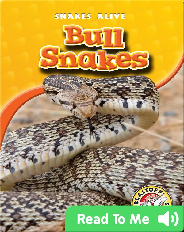 Bull Snakes