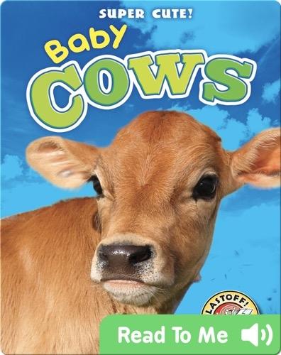 Super Cute! Baby Cows