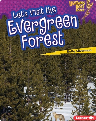 Let's Visit the Evergreen Forests