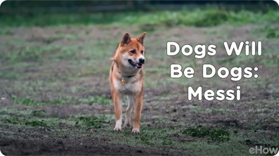 Messi | Dogs Will Be Dogs
