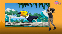Toucan Dance