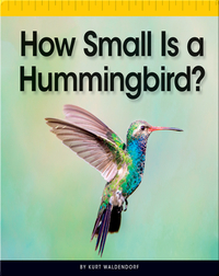 How Small Is a Hummingbird?