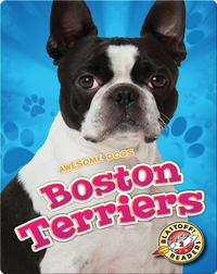 Awesome Dogs: Boston Terriers
