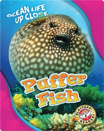 Ocean Life Up Close: Puffer Fish
