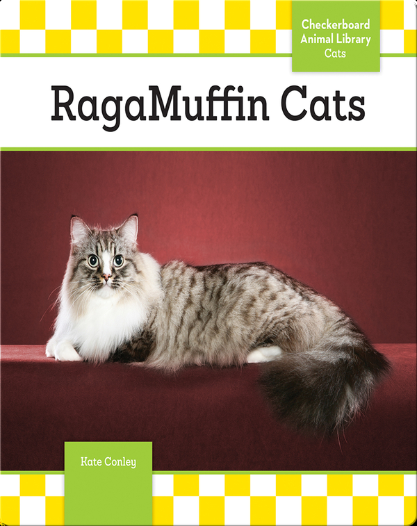 RagaMuffin Cats