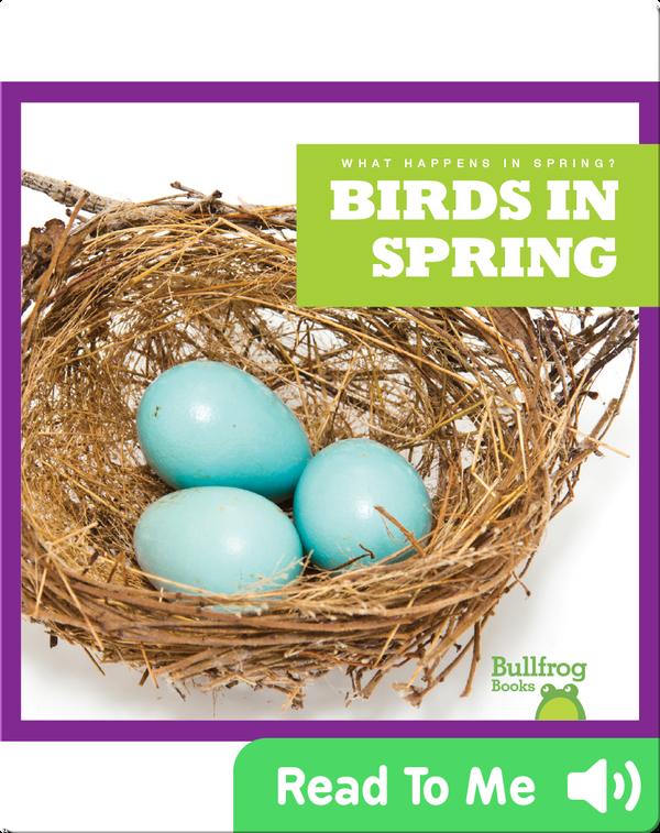 What Happens In Spring? Birds In Spring