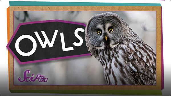 SciShow Kids: Amazing Owl Superpowers!