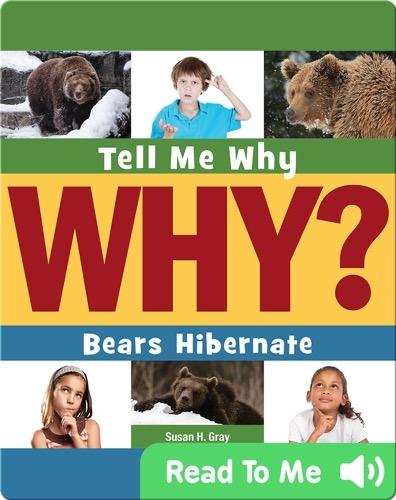 Bears Hibernate