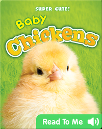 Super Cute! Baby Chickens