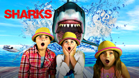 When SHARKS ATTACK! The Great White Shark - All About Sharks for Kids