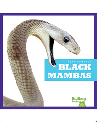 Reptile World: Black Mambas