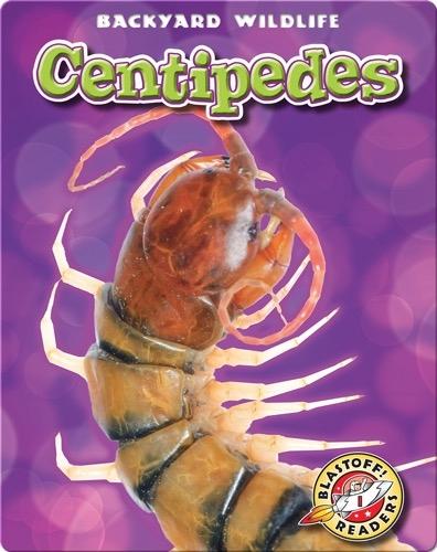 Backyard Wildlife: Centipedes