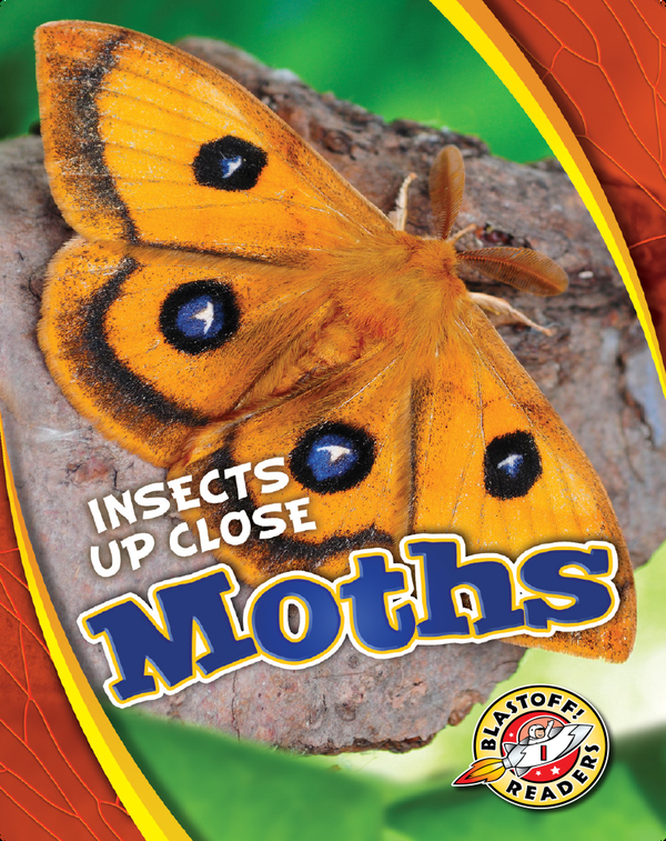 Insects Up Close: Moths