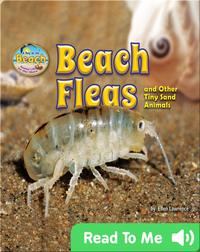 Beach Fleas and Other Tiny Sand Animals