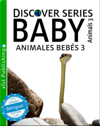 Animales Bebés 3/ Baby Animals 3