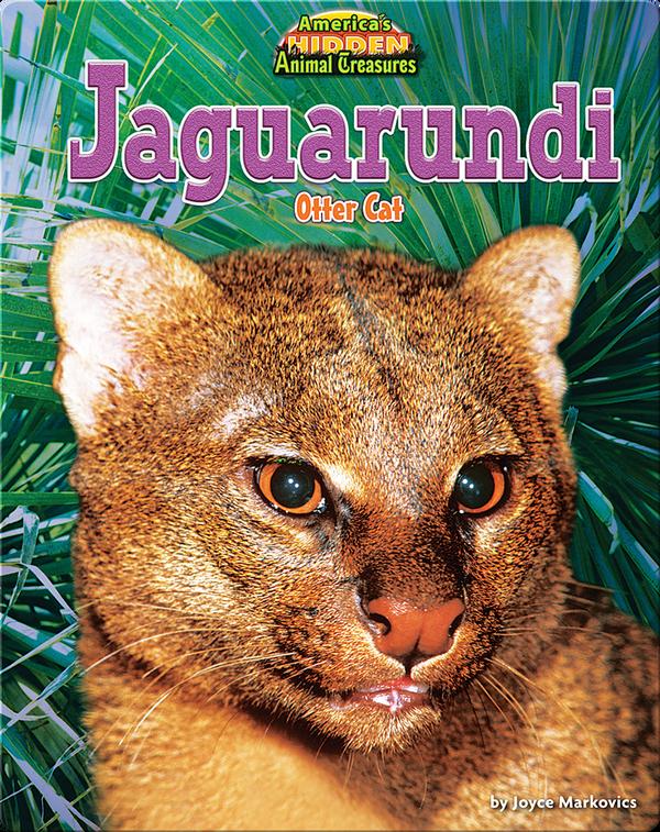 Jaguarundi: Otter Cat