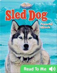 Sled Dog: Powerful Miracle