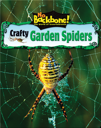 Crafty Garden Spiders