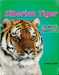 Siberian Tiger: The World's Biggest Cat