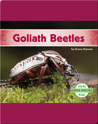 Goliath Beetles