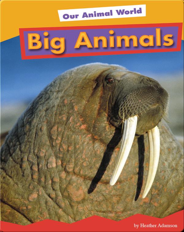 Big Animals