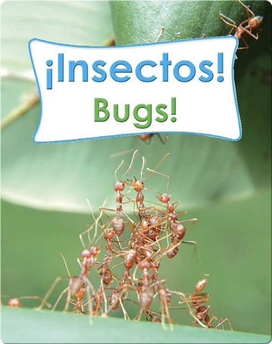 Insectos!  (Bugs!)