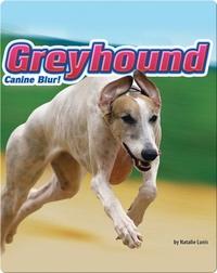 Greyhound: Canine Blur!