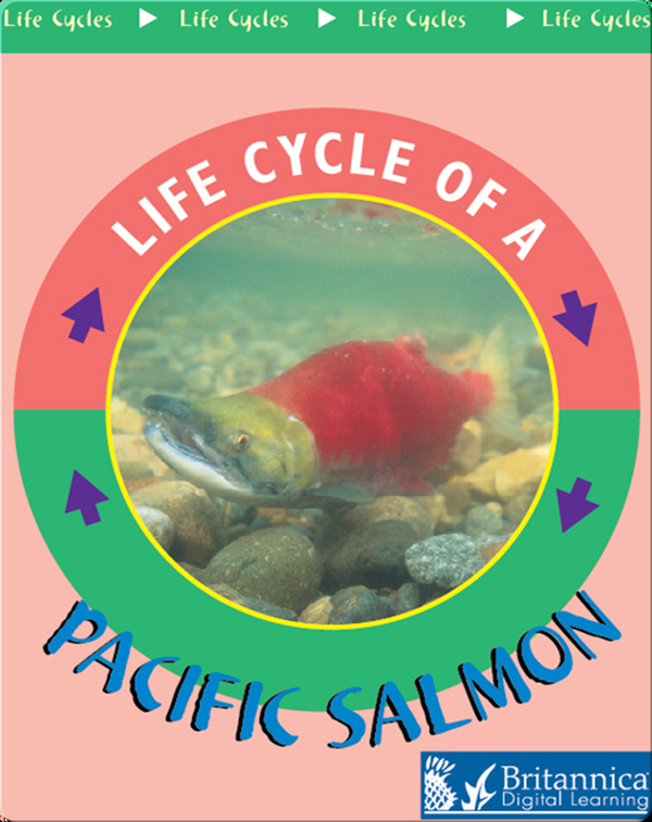 Life Cycle of a Pacific Salmon