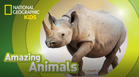 Amazing Animals: Black Rhino