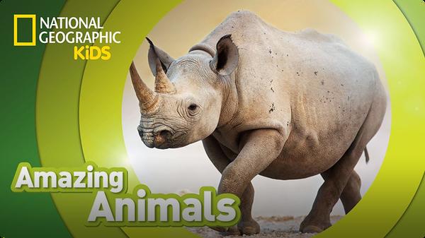 Amazing Animals: Black Rhino