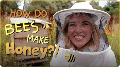 How do Bees make Honey? | Beekeeping with Maddie