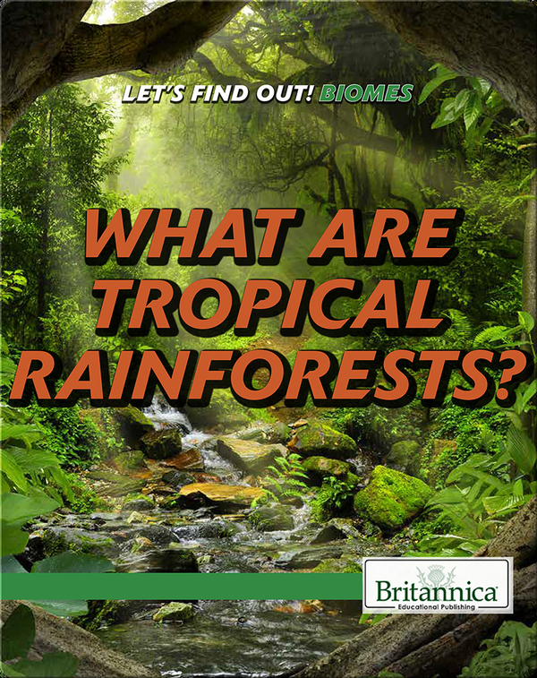 What Are Tropical Rainforests?