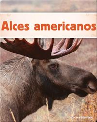 Alces americanos
