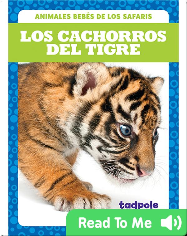 Los cachorros del tigre (Tiger Cubs)