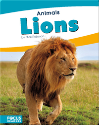 Animals: Lions