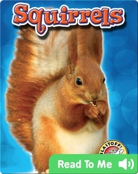 Squirrels: Backyard Wildlife