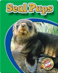 Seal Pups: Watch Animals Grow