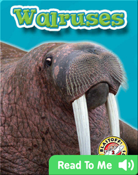 Walruses: Oceans Alive