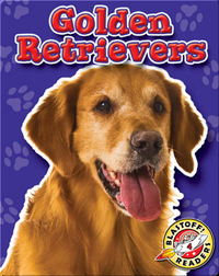 Golden Retrievers: Dog Breeds