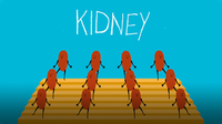 The Kidney That Lived in 4 People