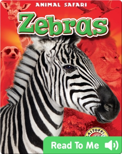Zebras: Animal Safari