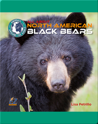 All About North American Black Bears