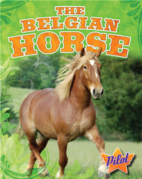The Belgian Horse