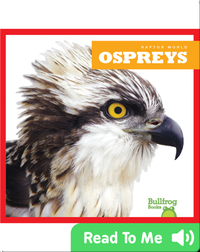 Raptor World: Ospreys