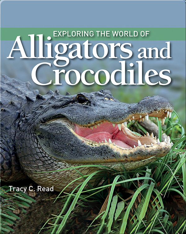 Exploring the World of Alligators and Crocodiles
