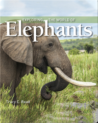 Exploring the World of Elephants