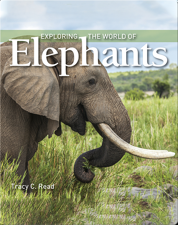 Exploring the World of Elephants